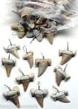 10x SHARK'S TEETH PENDANTS Genuine Real Sharks Tooth for Necklaces Bulk Lot NEW!