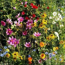 1 oz, APPROX 12,500 Seeds (Gulf Coast/Caribbean Wildflower Mix) 125 square feet