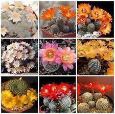 20 seeds of  Aylostera mix,seeds cacti mix, succulents seeds mix   C