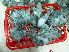 Wholesale AAA Rare NATURAL Green Ghost Quartz Crystal Cluster Specimen
