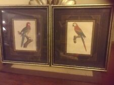 Bird pictures art matted and framed prints Signed Lot of 2 Macaw Parrot
