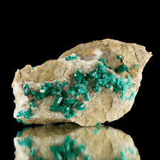 "4"" Sharp Sparkly Emerald Green DIOPTASE Crystals Altyn-Tyube Kazakhstan for sale"