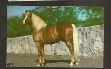 Vtg 1950's - 60's HS CROCKER Crome Postcard #HSC-146 WESTERN THOROUGHBRED HORSE