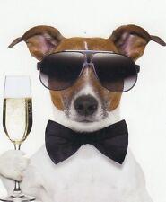 Klappkarte de luxe: Jack Russel - Terrier Chico als Partygänger und Lebemann