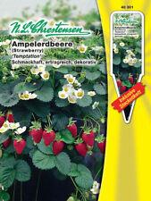 N.L. Chrestensen Ampelerdbeere ertragreich ,schmackhaft  40301 Erdbeeren Samen