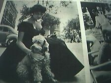 newspaper cutting 1956 piebald poodle best club dogs society