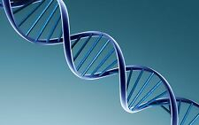 Gene Synthesis  services Free Shipping