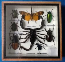 REAL EXOTIC 8 INSECT DISPLAY TAXIDERMY ENTOMOLOGY JEWEL SCORPION BEETLE INSECTS