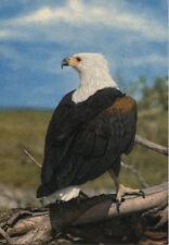 Alte Postkarte - Fischadler