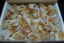 Citrine Points Collection 1 Lb Gold Yellow Geode Crystals 00856