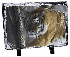 Tiger in Snow Photo Slate Christmas Gift Ornament, AT-9SL