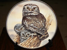 Collectors Plate by Edwardian - 'Little Owl' Excellent  20.5cm Diameter