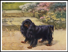 KING CHARLES ENGLISH TOY SPANIEL BLACK AND TAN DOG LOVELY DOG PRINT POSTER