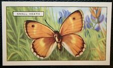 Small Heath   Butterfly   Vintage Illustrated Colour Card # VGC