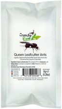 Edible Insects Edible Bugs Bush Tucker Queen Leafcutter Ants 8g Crunchy Critters
