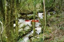 PHOTO  1994 CORNWALL LANLIVERY RIVER BELOW THE TREFFRY VIADUCT IN THE LUXULYAN V