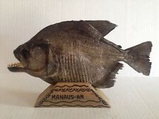"""MOUNTED BLACK PIRANHA-9-1/2"""" LONG FROM THE AMAZON RIVER BRAZIL-NEW TAXIDERMY"""