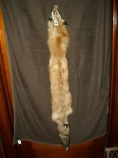 NICE tanned RED FOX HEAVY fur pelt skin taxidermy F8 man cave den cabin decor