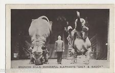 Circus, Broncho Bill's Elephants Salt & Saucy Postcard, B524