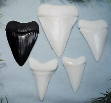 LOT OF 5  GREAT WHITE TEETH REPLICA/ VERY NICE!!
