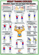 Weight Training & Bodybuilding A2 Chart / Poster - Shoulders & Back Muscles