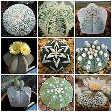 20 semi in miscuglio di Astrophytum mix ,piante grasse,seed cactus mix