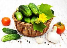 Einlege- und Snack Gurken Samen Mix - aus biologischem Anbau