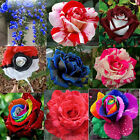 1000 x Rose seeds Pink Black Red Purple chocolate coffee Blue Rainbow climbing