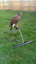 Stainless steel Falconry real bow shaped perch large harris hawk goshawk