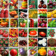 200PCS/bag Rare Mixed Tomato Seeds Vegetable Fruit Seed Home Garden Plant Decor
