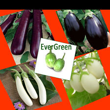 5 in One EGGPLANT -Kitchen Garden Money saver pack  V-31 +V-46 +V-47 +V-88 +V-98