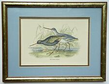 "Vintage Bird Engraving  ""The Dusky Totanus"" Lizars and Stewart Nicely Framed"