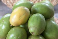 Spondias Mombin - Hog Java Plum Makok - Rare Tropical Plant Tree Seeds (4)