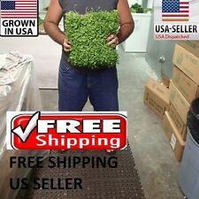 HUGE BIG Pennywort Mat carpet wall Easy Aquarium aquascaping planted tank