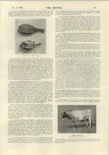1898 Coyne Fletcher Sadie Cushing Peterkin Dunglass Breeding Stock