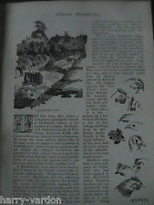 Chicken Poultry Fowl Farm Heathfield Sussex History Rare Victorian Article 1894