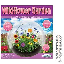 WILD FLOWER GARDEN GLASS TERRARIUM GROW YOUR OWN discovery toy gift novelty kids