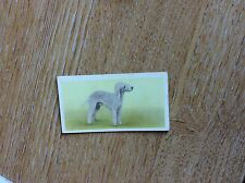 Vintage PRIORY TEA Trading Swap Card - I-SPY DOGS - No 6 1957 t2-1