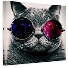 Fashion Cool Glasses Cat Canvas Print Wall Art Painting Picture NO frame 50*50cm