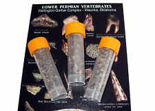 Permian Vial of Shark tooth fossils, fish scales, amphibians, reptiles Oklahoma