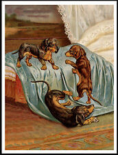 DACHSHUND PUPS HAVE FUN ON OWNERS BED LOVELY VINTAGE STYLE DOG PRINT POSTER