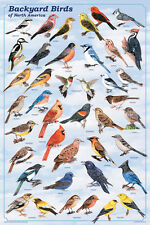 Backyard Birds POSTER 'North America USA Pets' Educational Chart NEW Licensed