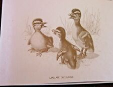 Baby Ducklings Boxed Note Card