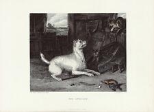 EH LANDSEER Antique 19thC c1880 Bookplate Engraving Dog & Cat THE INTRUDER