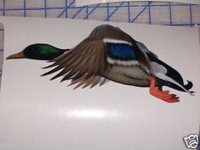 Mallard Duck Hunting #1 Full color Window Decal Tailgate Sticker Decals Stickers