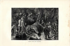 S.P.HALL -  CEYLON ELEPHANT SHOT - WOOD ENGRAVING FROM 'THE PRINCE'TOUR' (1877)