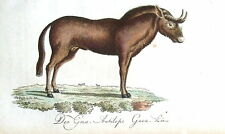 WILDEBEEST GNU Bechstein Hand Coloured Antique Natural History Print 1796