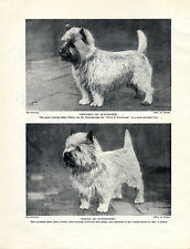 CAIRN TERRIER NAMED DOGS OLD ORIGINAL PRINT PAGE FROM 1934