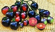 30 Seeds Indigo Rose Black Tomato Fruit Vegetable Seed Organic Seeds
