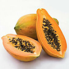 8Pcs Maradol Papaya Seeds Home Garden Vegetable Fruit Tree Plants Seeds Outdoor